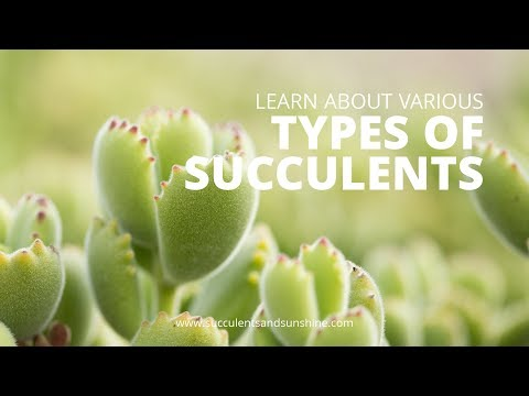 Types of Succulents -- Cold Hardy and Soft Succulents