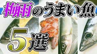 【 プロ必見 】2021年6月 はこの 魚 を買え!【 魚市場 目利き ・ せり人ムタロー 】