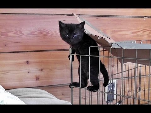 Image result for cats escaping