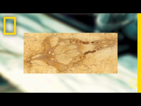 Fossil Found In Kitchen Counter | National Geographic