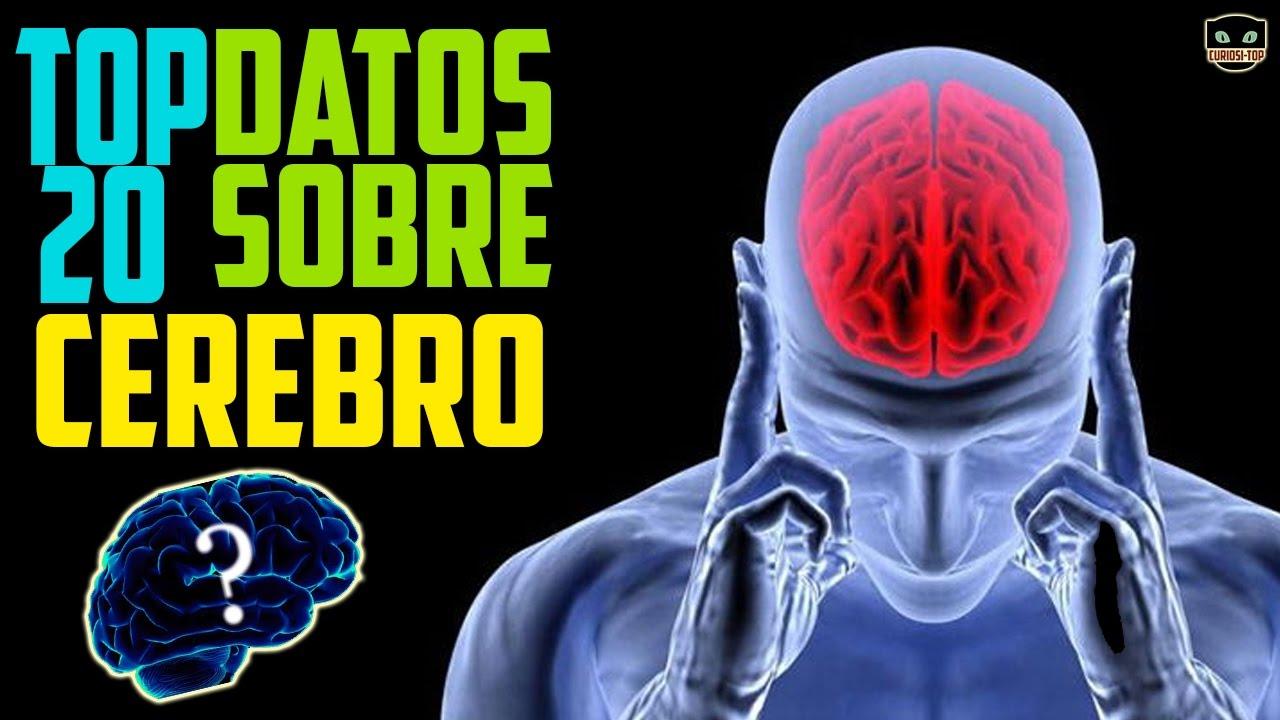 TOP 20 Datos curiosos del CEREBRO | curiositop