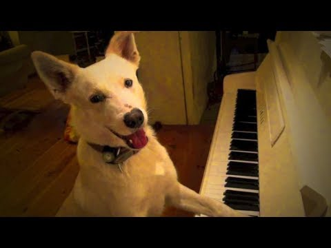 Best of Dogs 🎤🐶 Awesome Dogs Singing (Part 1) [Funny Pets]