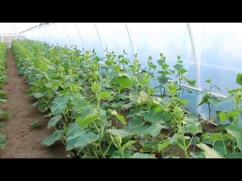 Вирусные болезни растений это Что такое Вирусные