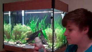 How To Keep Aquatic Plants - Beginners Guide To Aquariums
