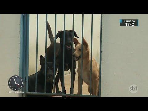 Envenenamento de animais domésticos preocupa moradores de cidade paulista | SBT Notícias (18/10/17)