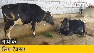 MP: गाय Tax लगाने पर विचार कर रही सरकार