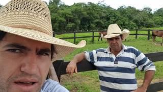 HEY ROY: EPISÓDIO 6 - PRIMEIRA TEMPORADA