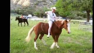 2013 funniest horse video contest winners