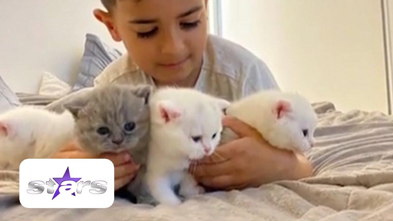 Pisicile, un remediu împotriva plictiselii, din izolare. Un artist și-a umplut casa cu pisici
