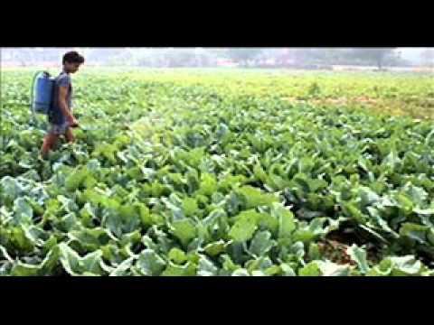 Las causas y fuentes de contaminaci n de los alimentos youtube - Fuentes de contaminacion de los alimentos ...