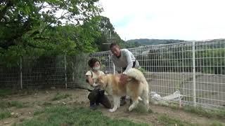 Dog Rescue A&Rの素顔  高木が担当します。