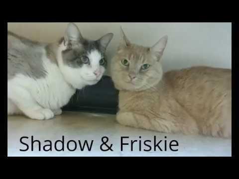 Meet Friskie 199249 & Shadow 199250!