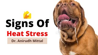 Signs Of Heat Stress In Dogs - By Dr. Anirudh Mittal | Dogs Heatstroke | @Pupkitt Pet Care