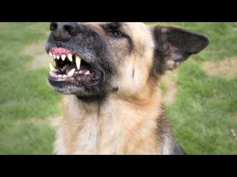 Schaumburg Dog Bite Attorney | Wheaton Dog Bite Lawyer Steven J. Malman