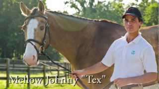 "Mellow Johnny ""Tex"" Offered for Sale by Schramm Equestrian"
