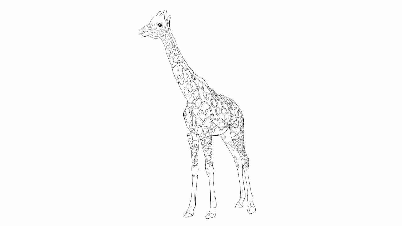 того, картинки жираф поэтапно взять проект дома