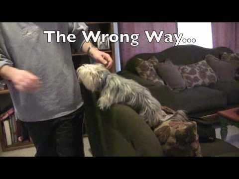 how-to-train-small-dogs-to-stay-off-your-furniture