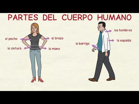 Aprender español: Partes del cuerpo humano (nivel básico) / Español ...
