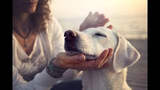 The Natural Tranquilizers For Dogs