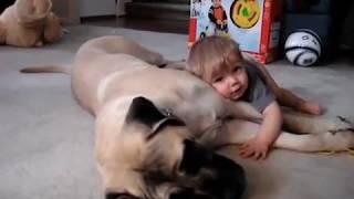 A Boy And His English Mastiff Christmas Day