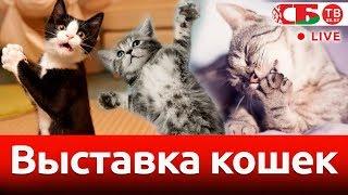 Большая зимняя выставка-шоу кошек | СТРИМ