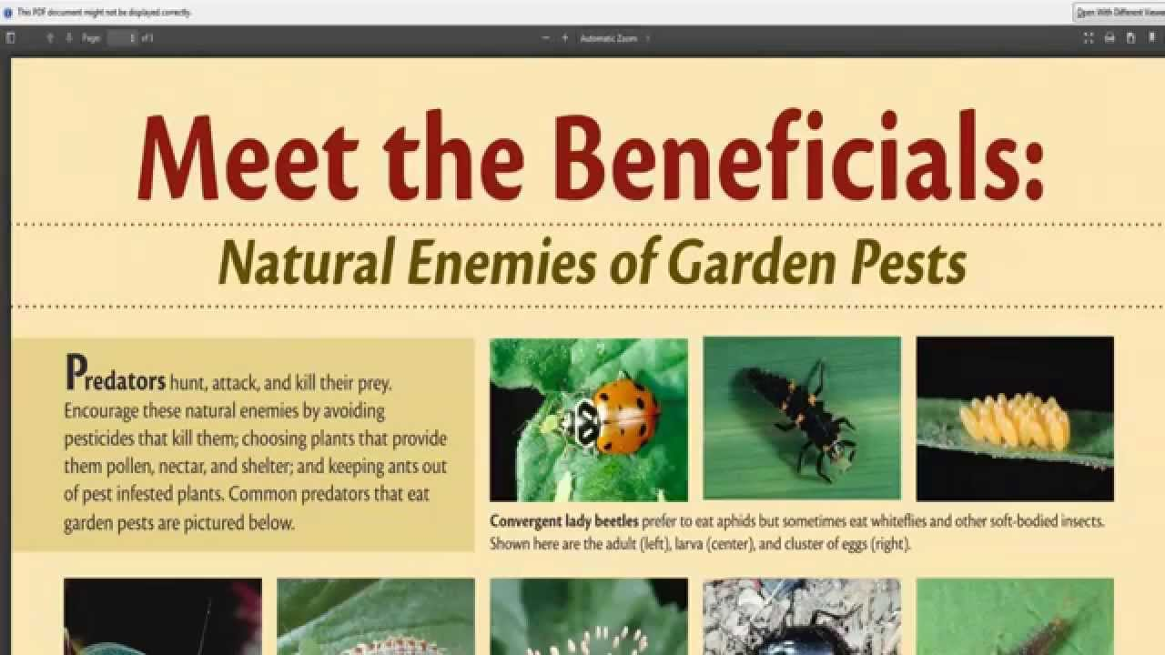 Ordinaire Which Are The Beneficial Predatory Insects For Your Vegetable Garden    YouTube