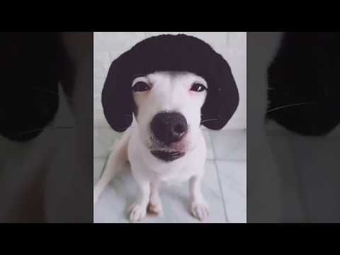 Funny Animals & Pets Compilation | Dog vs Cat