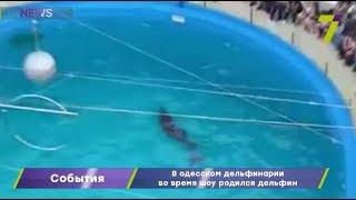 В одесском дельфинарии во время шоу родился дельфин