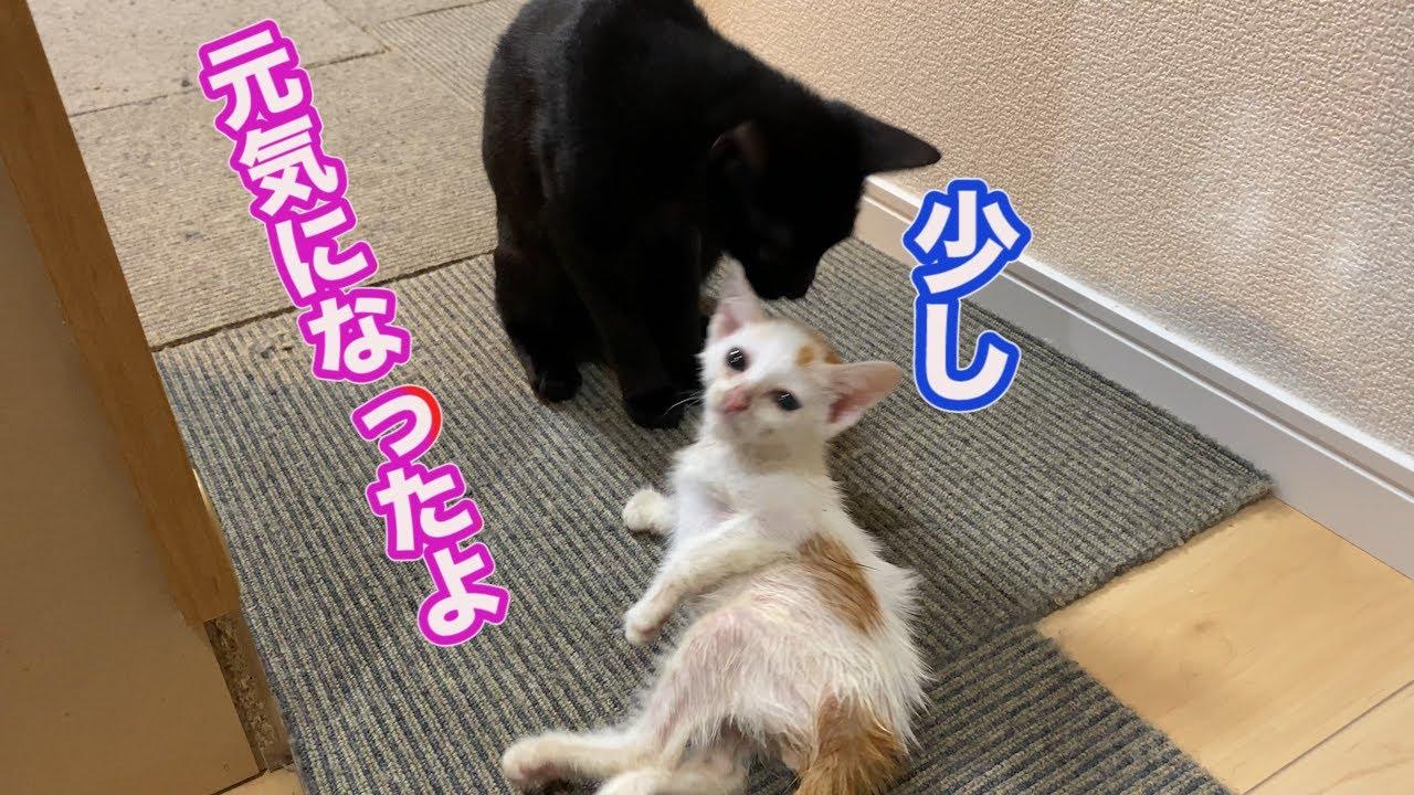 病気の子猫ロロのその後