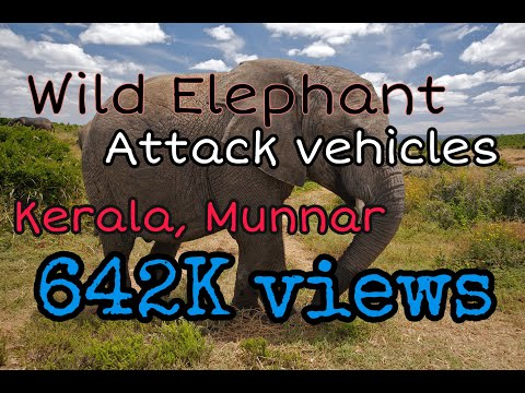 wild elephant @ munnar,kerala,eco-point - YouTube