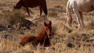 All the Pretty Little Horses lullaby video