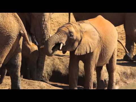 South Africa Travel with Abercrombie & Kent