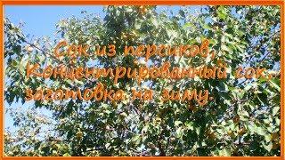 Сок из персиков, Концентрированный сок, заготовка на зиму