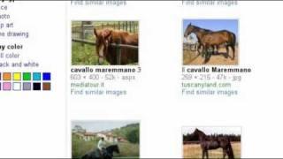 razze cavalli italiani