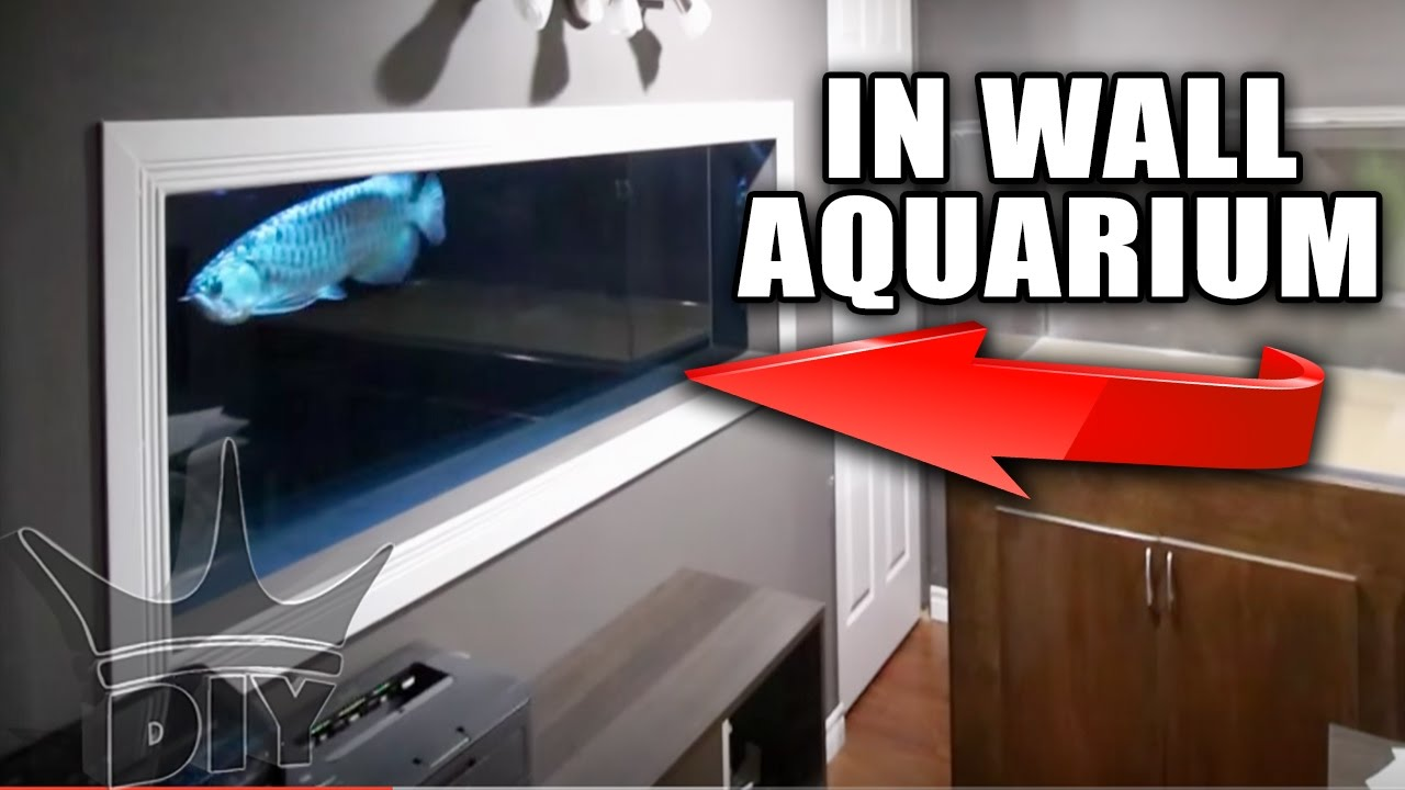 Aquarium built into the wall update youtube aquarium built into the wall update amipublicfo Gallery