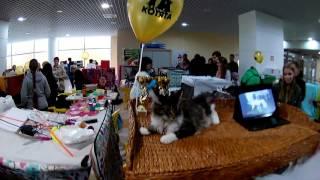 Международная выставка кошек в Пензе