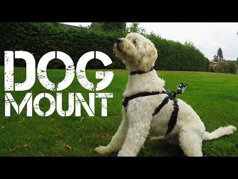 GoPro Dog Mount