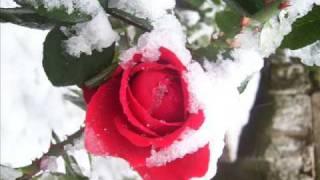 Анжелика Агурбаш - Роза На Снегу