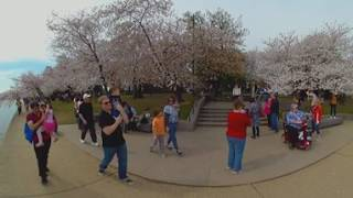 Cherry Blossoms DC 2017 - 360 Degree
