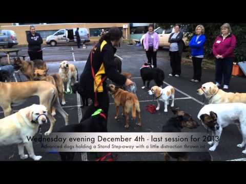 The Last Training Session For Alpha Dog Training, 2013