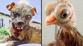 Horrifying Pets We've Bred Into Existence