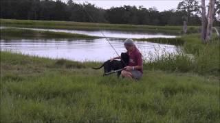 Watermark Retrievers Training Intro To Duck Hunting