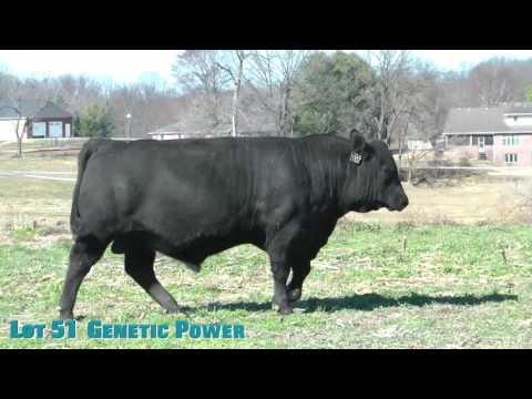 Lot 51  Genetic Power