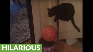 Hilariously majestic jumping cat set to classical music