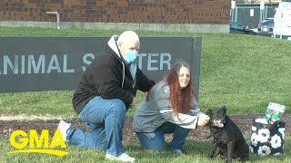 Dog missing for 3 years is reunited with owners