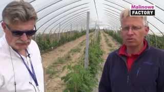 Rozwiązania wspomagajace odporność malin