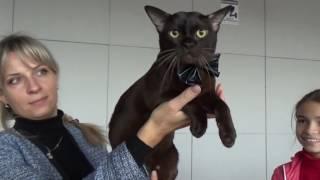 Котооскар в Камышине. Выставка кошек.