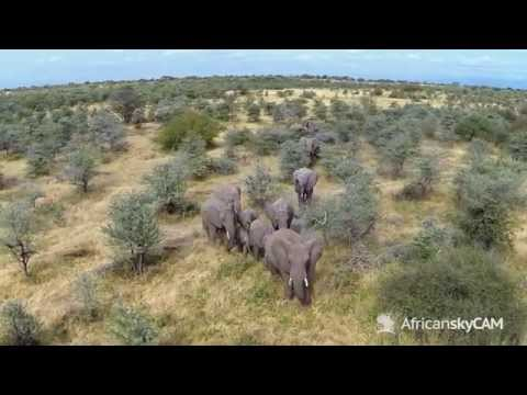 Manyara Ranch: An Aerial Exploration