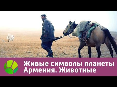 Живые символы планеты. Армения. Животные | Живая Планета