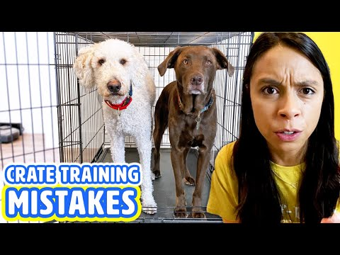 10 Crate Training Mistakes  Dog Barking in Crate? Watch this!